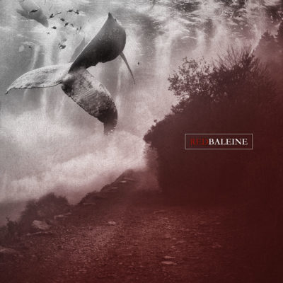 red_baleine_collage